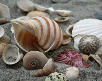 Colorful photo different seashells, bathroom decor, wall art