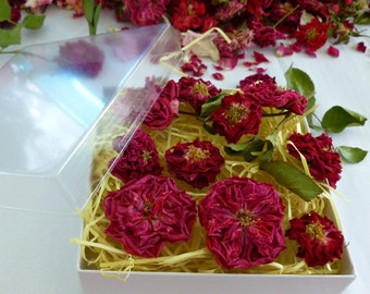 Dry Miniature Red Roses, Craft Supplies, Dry Flowers, Resin Jewelry, Rosebud, Flower Girl, Wedding Confetti, Centerpiece, 12 Dry Red Roses