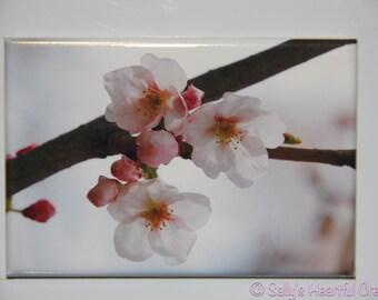 2x3 Cherry Blossom Magnet Wedding Favors