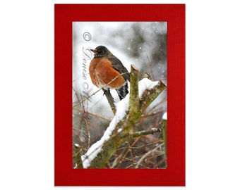 Robin in the Snow Cards - Robin Christmas Cards - Robin Holiday Cards - Blank Inside Robin Cards - Bird Holiday Cards Red Green