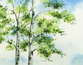 Silver Birch Trees in Spring Original  Watercolor for Sale 5 x 7