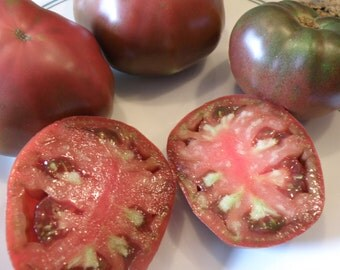 Gypsy Heirloom Tomato, Open Pollinated and Organically Grown