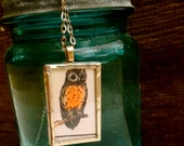 Little owl from Vintage Primer book page captured under glass in a 1 x 1 1/2 inch soldered necklace. Chain is 17 in. drop.