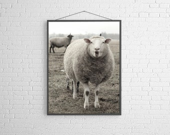 Sheep Photography Sheep Animal Photography Ewe Black and White Photography