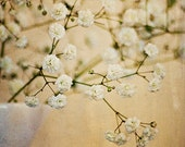 Baby's Breath - 5x7 fine art photograph. Flower photography. Still life with vase. Made in Israel