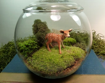 Covered Vase Terrarium// DEER// Moss//For HOME or OFFICE// Nice Unusual Gift. Terrariums by mossterrariums on Etsy.