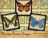 """Antique Butterfly Images Digital Collage Sheet- 1"""" Squares Inchies-- Instant Download"""