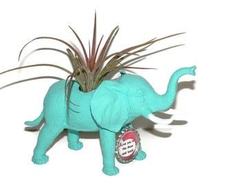 Air plant in elephant animal planter and personalized bottle cap message.