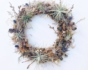 Living Wreath // No. 1 // Air Plant Tillandsia