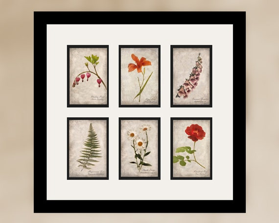 Set of 6 Botanical Prints - Vintage Style Original Photograph - Instant Collection Floral Flowers Home Decor Distressed Wall Art
