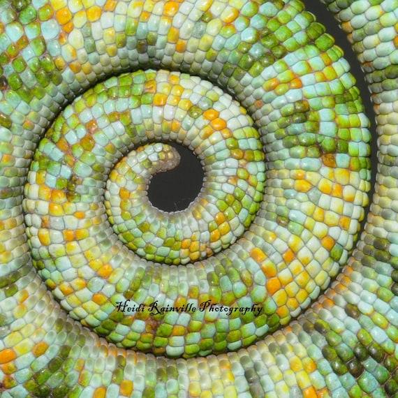 Items Similar To 5x5 Photograph Mosaic Chameleon Lizard