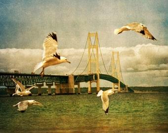 A Flock of Gulls by the Bridge at the Straits of Mackinac in Michigan between Lake Michigan and Lake Huron No.2127 - A Fine Art Photograph