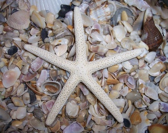White Finger Pencil Starfish- Sold Individually ONE- Mix & Match Sizes, Great for Coastal DIY Decorating