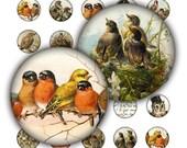 Digital Collage Sheet birds nest circles 1 inch round images Printable Download diy jewelry pendant bottle cap vintage postcard scrapbooking