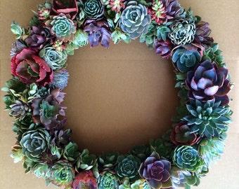"""X Large 24"""" Succulent """"Rosalind"""" Wreath"""