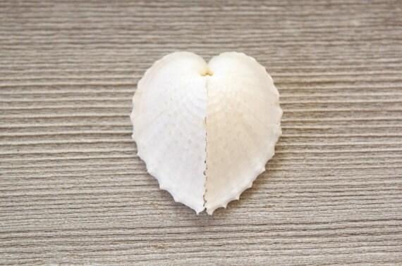 Beach Wedding Favors . beach wedding decor . white shells . heart shells . white seashells . nautical decor