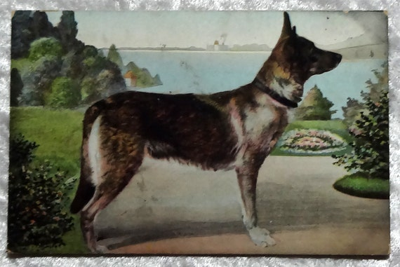 Antique German Shepherd Dog Postcard, Alsatian, Canine Animal, Vintage c1905