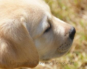YELLOW LABRADOR  PUPPY Greeting Card  Dog Portrait