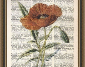 Gorgeous red poppy vintage illustration printed on a vintage dictionary page. Wall Art, Home Decor, Art Print.