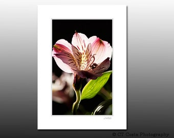 Flower Art Print, Signed Matted Print, Pink Petals, floral wall art, fits 5x7 inch frame
