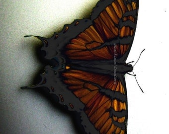 """Copper Butterfly - digital photography print  8 x 10"""""""