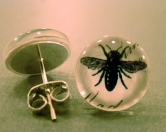 Bumble Bee Studs: Insect Glass Cabochon Earrings, Insects, Bee, Honey Bee, Summer, Bumble Bee, Bug