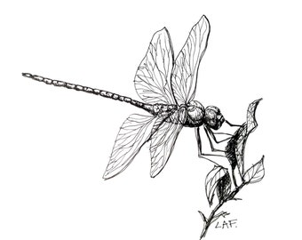 Original Drawing or Limited Edition Print -Dragonfly feeding in black pen and ink, Insects.