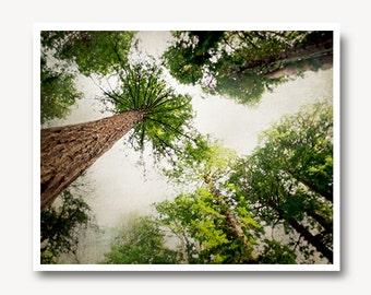 Redwood Tree Print, redwood photography, tree photography, wall art, California Fine art print, California redwoods, Muir Woods, nature