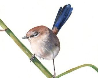 Wren watercolor painting - bird art - Original painting A4 size