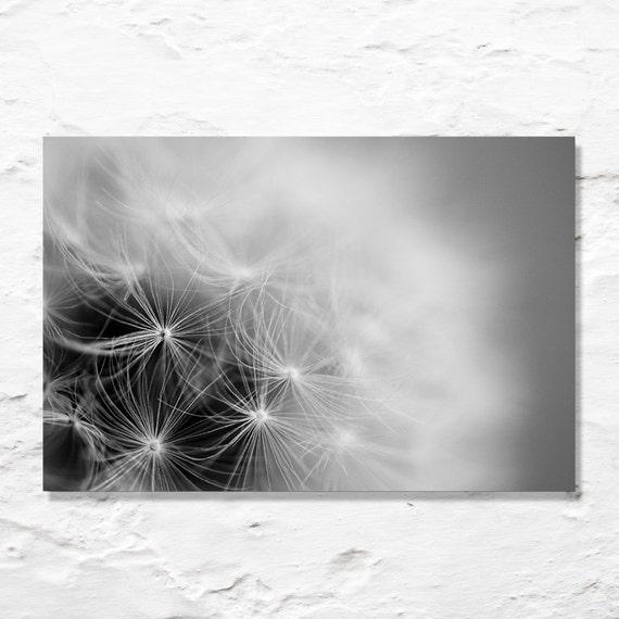 black and white dandelion photograph fine art photography home decor wall art minimalist photo simple nature