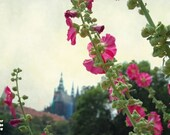 Prague in bloom, pink flowers, prague castle, Prague photogprahy, summer Prague, dreamy cityscape, whimsical landscape, 12x8, giclee print