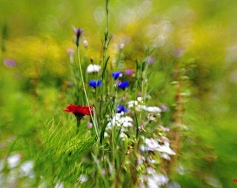Summer wild flowers, Nature photography, Lensbaby photograph, Flower print, Surreal art, Bright Red and Green, Fairy garden,Contemporary art