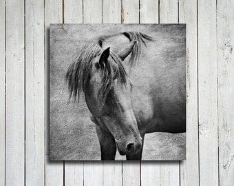 "Horse Watching - 30x30"" Canvas Print - Horse art - Horse decor - Horse Photography - Animal Photography - Black and White decor"