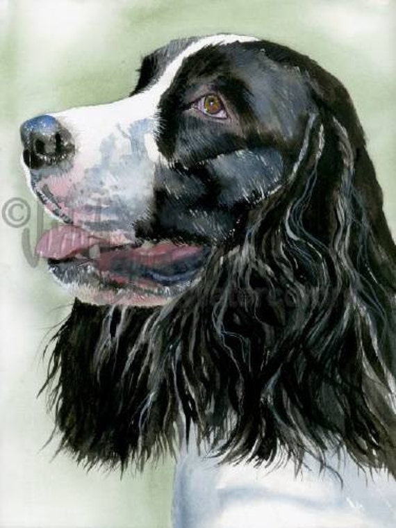 "Springer Spaniel, Black & White, AKC Sporting, Pet Portrait Dog Art Watercolor Painting Print, Wall Art, Home Decor, ""Spring Time"" by Stein"