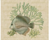 Teal fish Teal coral collage Digital download graphic image for Iron on fabric transfer burlap decoupage pillows cards tote bags No. 2128