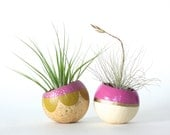 Air Plant Planter Duo with Air Plants  -  Pink, Chartreuse & Gold.  Ready to ship.