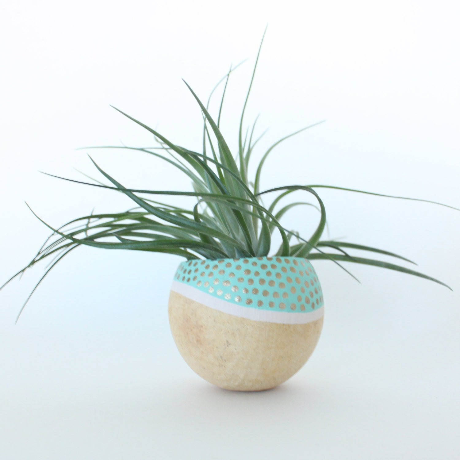 Air plant planter with air plant aqua white gold for Air plant planters