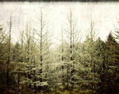 Moody Forest - 12 x 18 Photography Art Print- Olympic National Forest