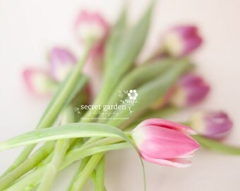 flower tulip stilllife photo print - whimsical fine art nature photography, wall art, pink, purple, light, pretty