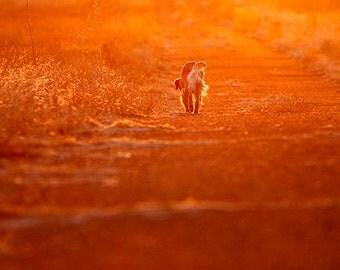 Into the Sunset, Dog Photography, Golden Retriever, Blank Photo Card, Sympathy Card