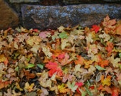 Digital Download The Old Ampitheater, Fall leaves, Autumn leaves, Autumn, Thanksgiving - thesetinytreasures