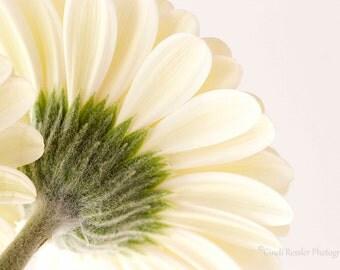 Photo, Fine Art, Gerbera Daisy, Photography, Floral,  Botanical, Flower, Garden, Wall Decor, Bedroom Decor, Housewarming Gift, Gift Ideas