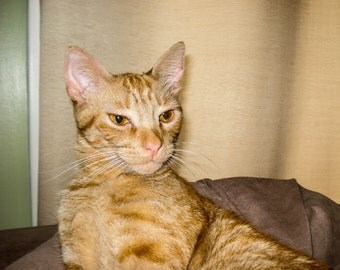 Mischievous Tabby Cat Photo