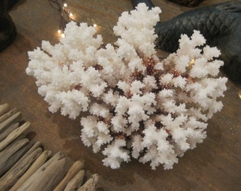 Beach Decor Brown Stem Coral - Natural Coral - Seashells- Beach Decor - Coastal Home Decor - White Coral - Seashells - Shell Supply