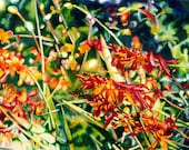 Watercolor Floral Painting of Scarlet Crocosmia, Montbretia, Tritonia, Garden Paintings, Floral Paintings, Red Flowers, Scarlet Flowers