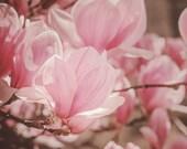 Flower Photograph, Pink Magnolia Blossoms, Pastel Pink, Brown, Fine Art Photography Print, Feminine Art, Nursery Wall Decor, Floral Wall Art