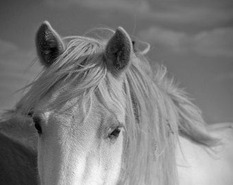 Pony photo, white horse photo, equine art, equestrian home decor, horse art, various sizes