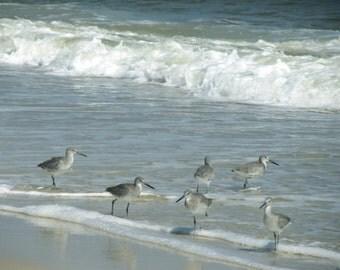 Ocean Photography Bird Photograph 8x10 Girls Day Out Shorebird Art Print Beach Decor Bird Art