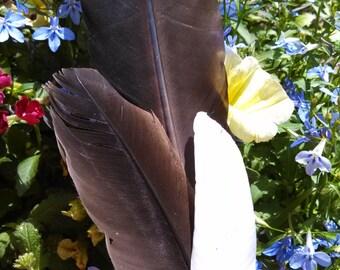 Sumdge Feather, Sacred Space, Ritual,  Incense, Spiritual, Ceremony, Smudge, Pagan