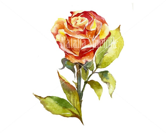 Yellow rose flower digital download from original watercolor in orange and green colors, cottage chic style painting clipart
